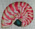 GES161 - Nautilus