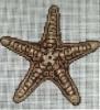 GES164 - Beige Starfish