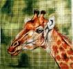 GEP209 - Giraffe